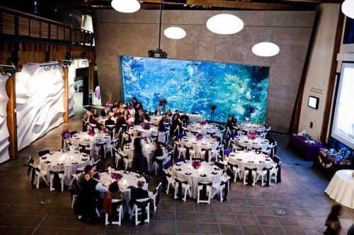 Dale Tu Photography Christopher Flowers Seattle Wedding Seattle Aquarium Reception