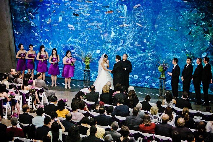 dale tu photography christopher flowers seattle wedding seattle aquarium