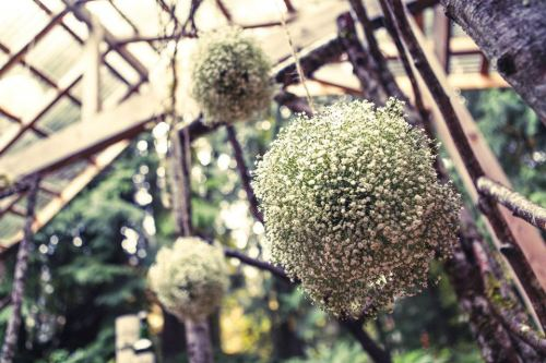 Christopher Flowers Lei Gong Photography wedding orange grey northwest rustic birch vintage white succulent rose baby's breath pomander