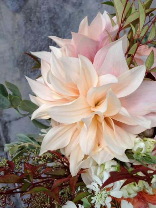 bouquet dahlia cafe au lait peach cream flower floral christopher flowers organic local design
