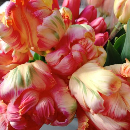 tulips peach local organic christopher flowers seattle floral design